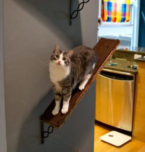 cat spaces modular